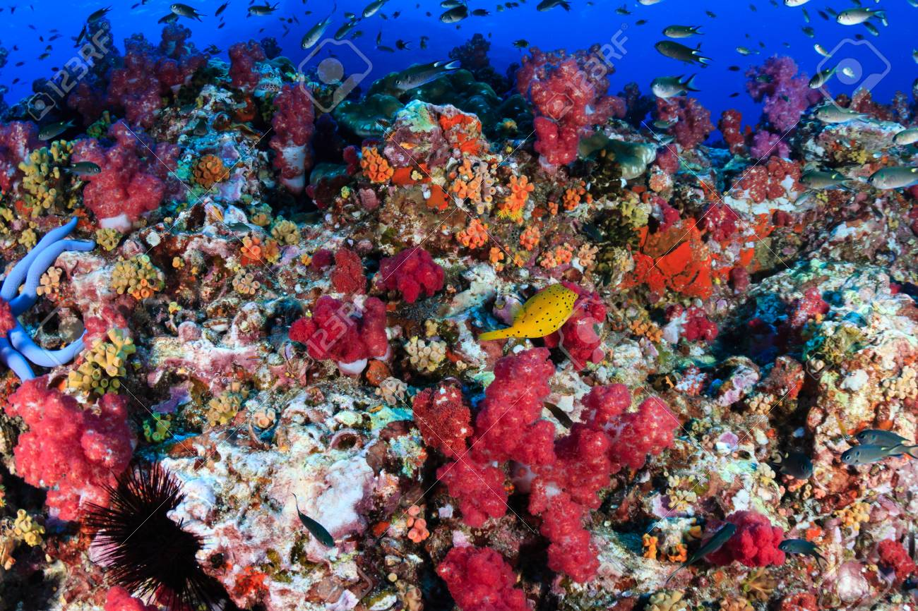 Colorful, Healthy Tropical Coral Reef Stock Photo, Picture And ...
