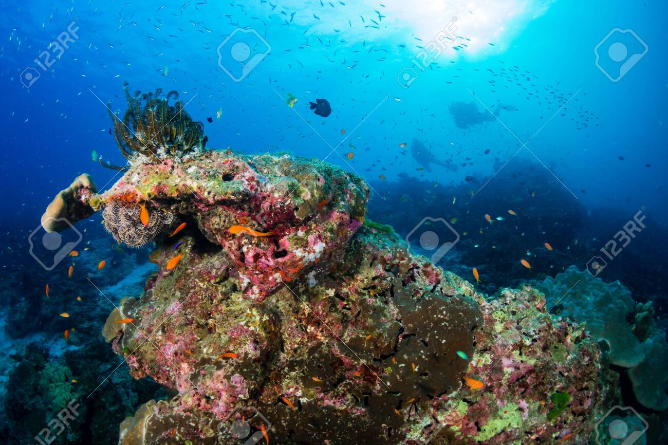 Thriving, healthy tropical coral reef in Thailand's Similan Islands - 135114053