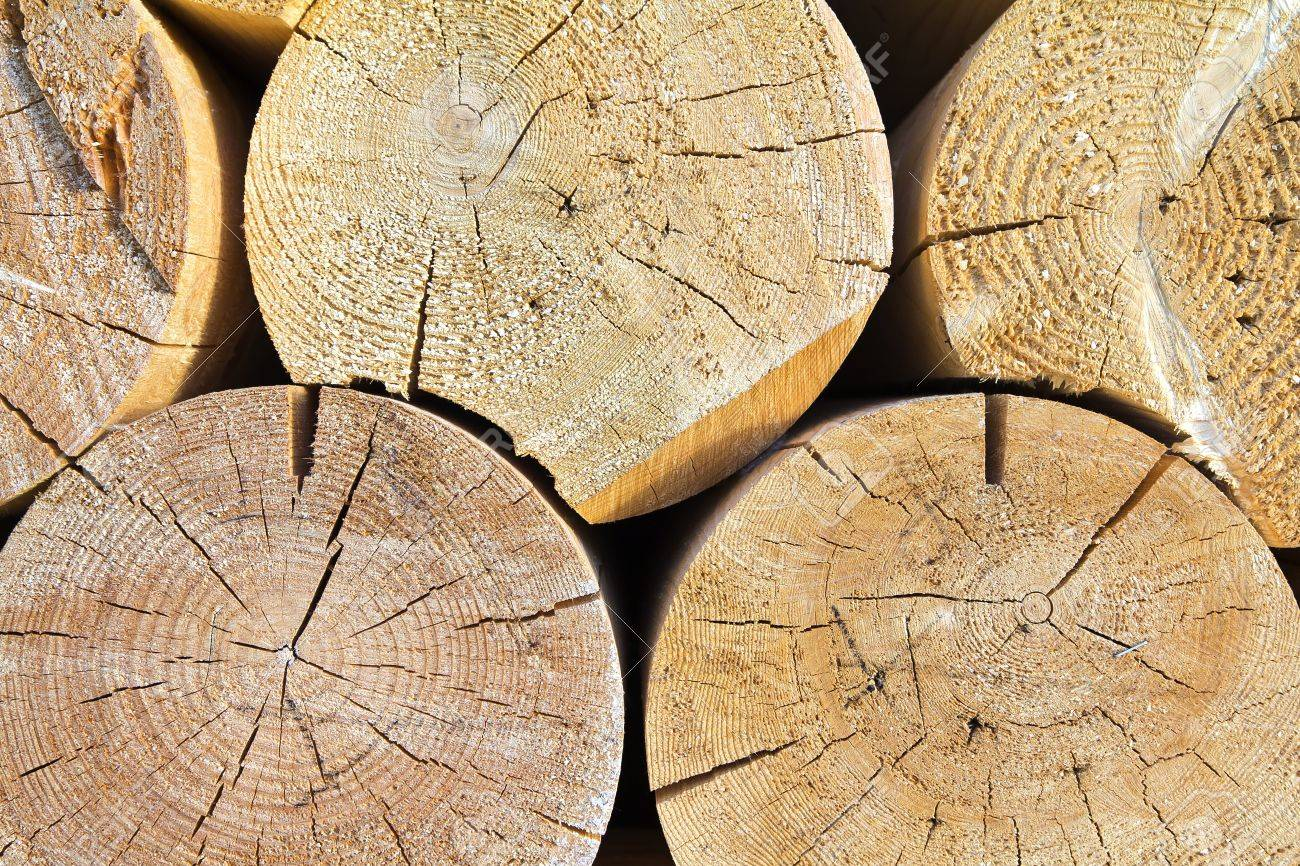 Tree trunk cut Stock Photo - 10285304