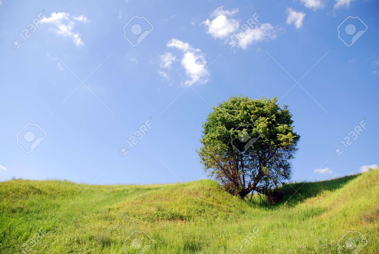 solitary tree Stock Photo - 1328228