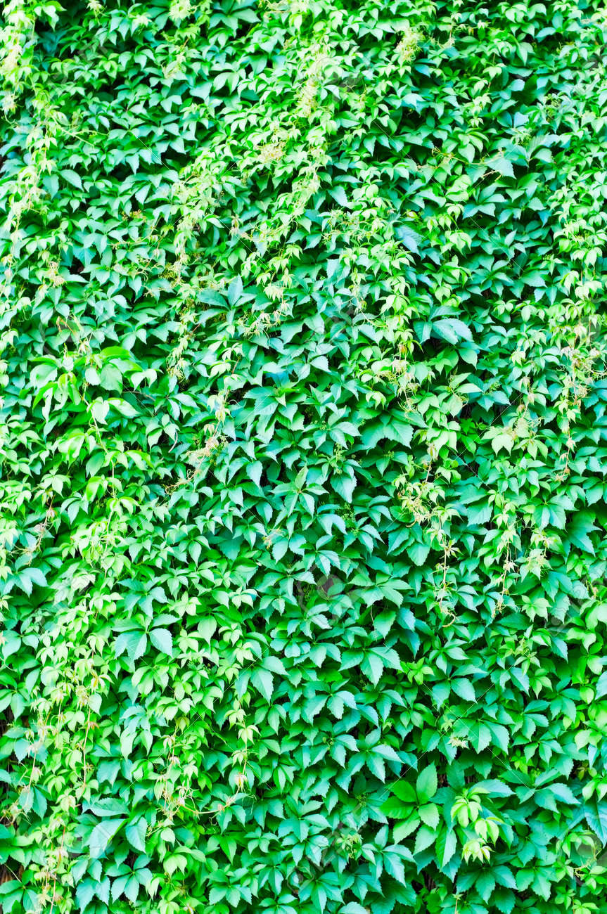 green background Stock Photo - 7308560