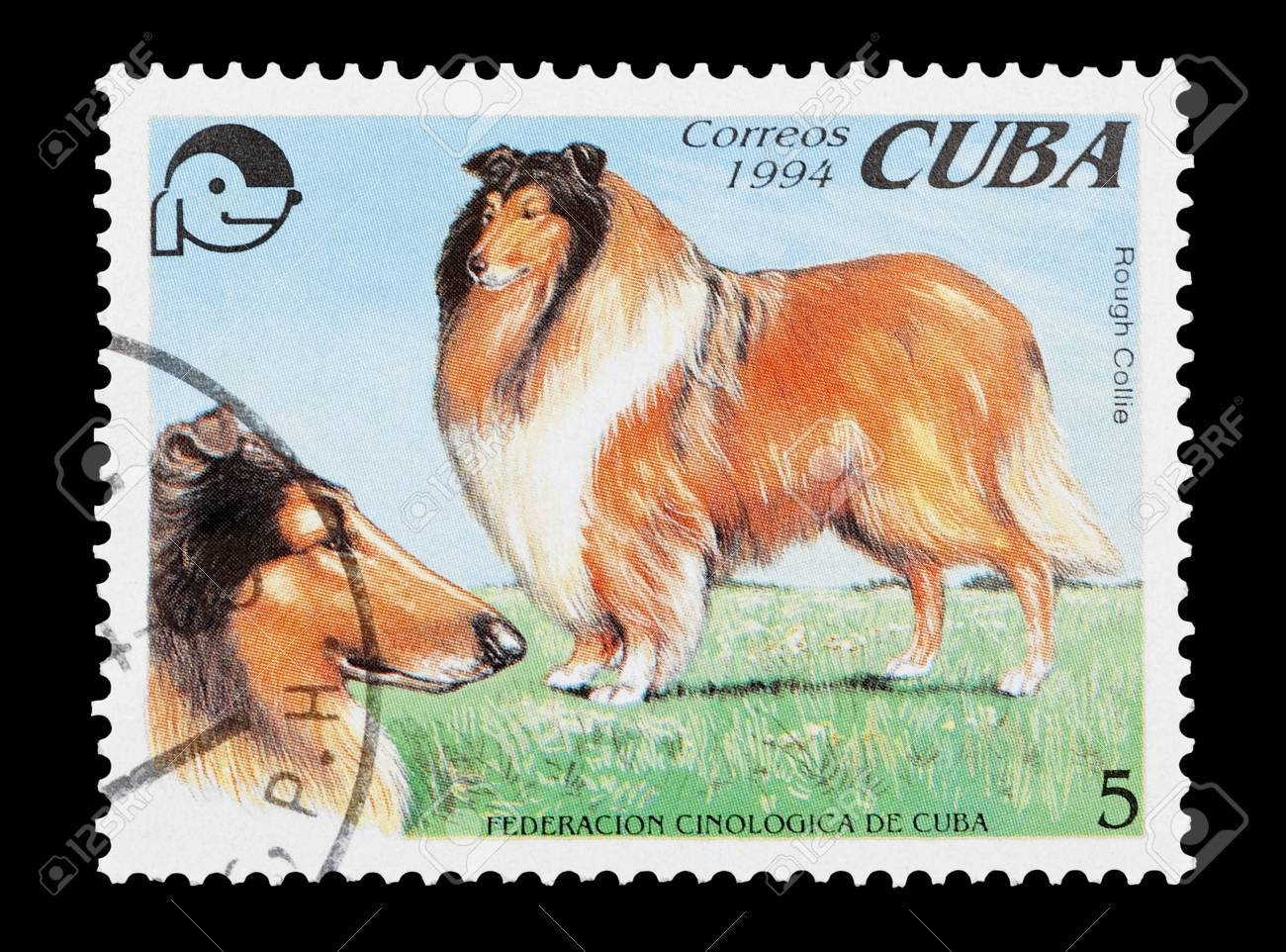 mail stamp printed in Cuba featuring a pedigree Rough Collie dog Stock Photo - 6715722