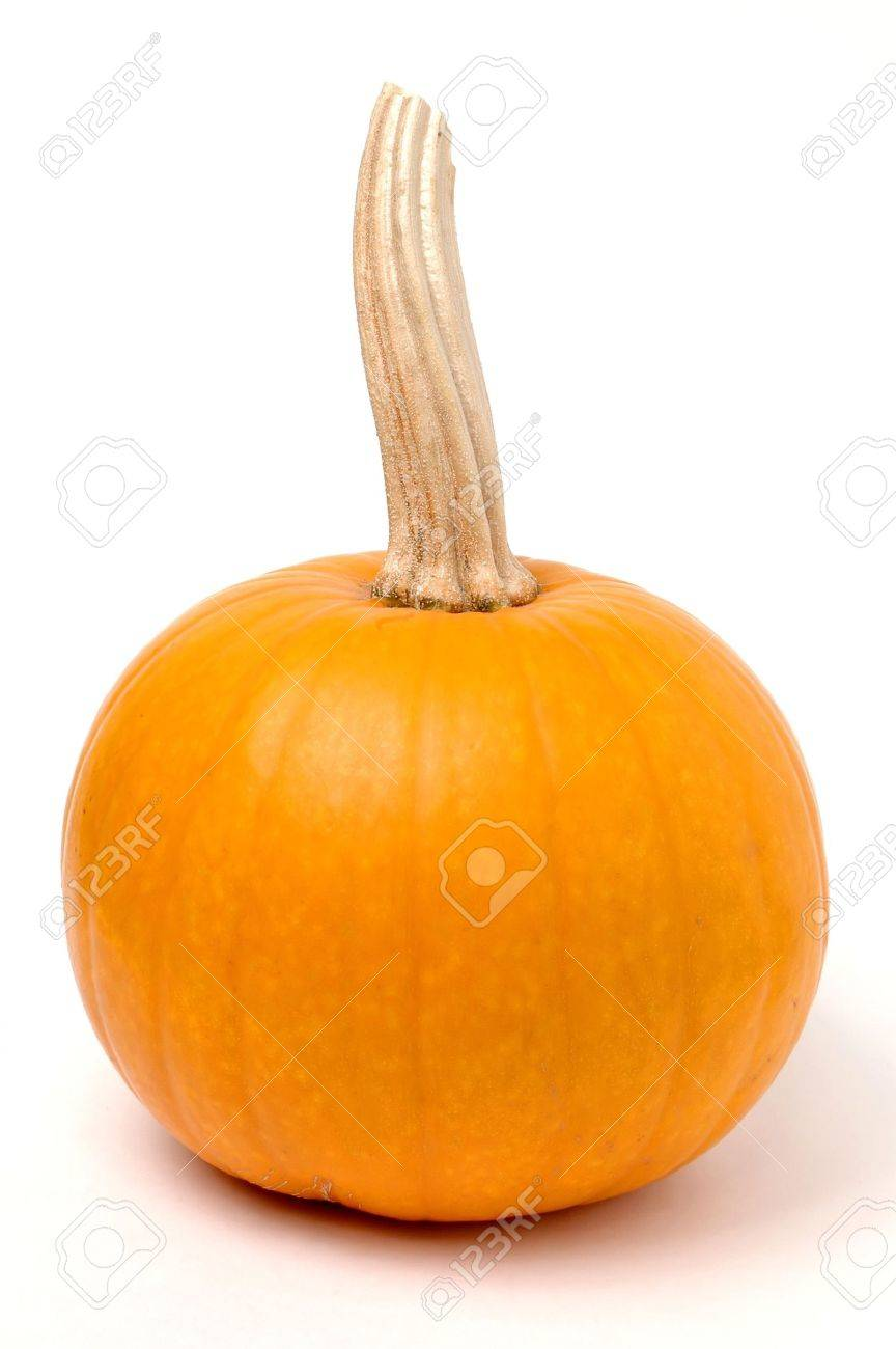 Sugar Pumpkin - 595942