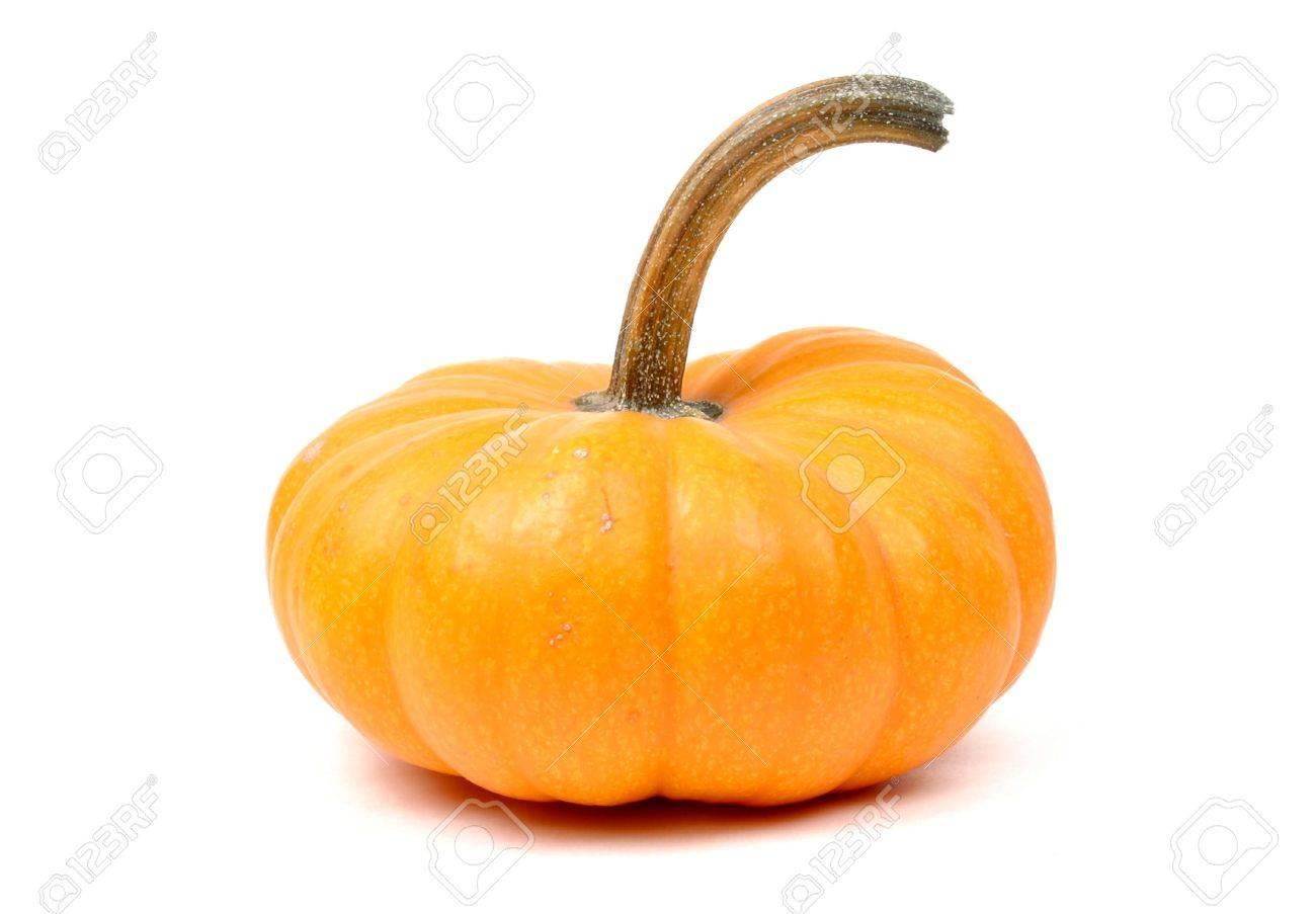 Miniature Pumpkin - 595938