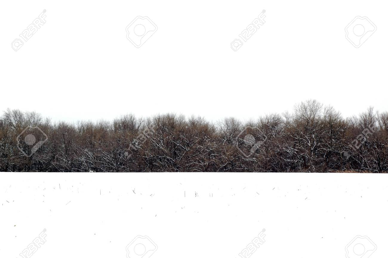 Photo of a farm field covered with snow and woods in the background - 784308