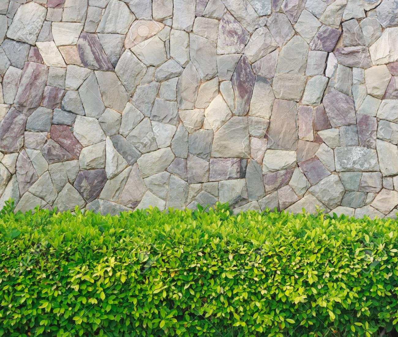 Planta Con Pared De Piedra Jardin Decorativo Fotos Retratos - Piedra-jardin