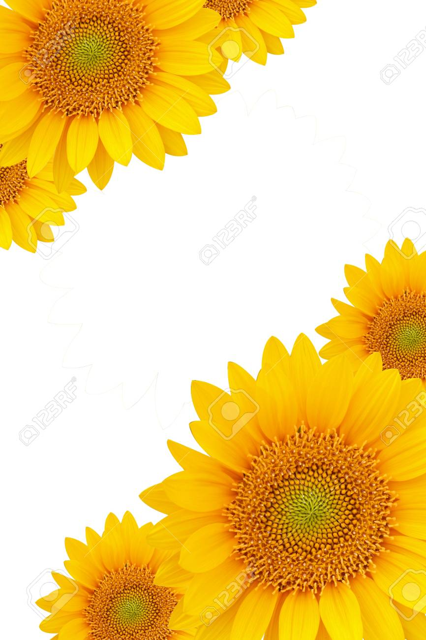 Sunflower Frame Stock Photo, Picture And Royalty Free Image. Image ...