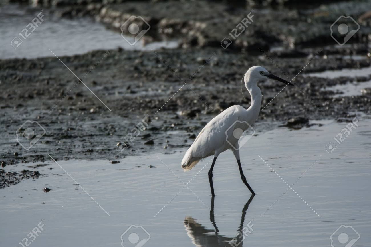 EgretThe Overall Look Is A Large Water Bird With Long Neck And Legs
