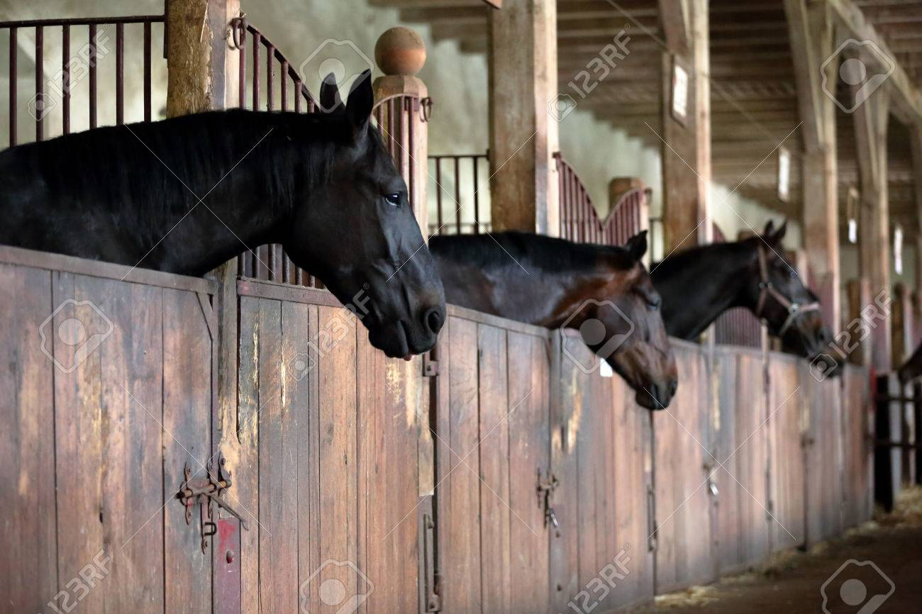 Horses In The Vintage Stable Stock Photo Picture And Royalty Free Image Image 60730497