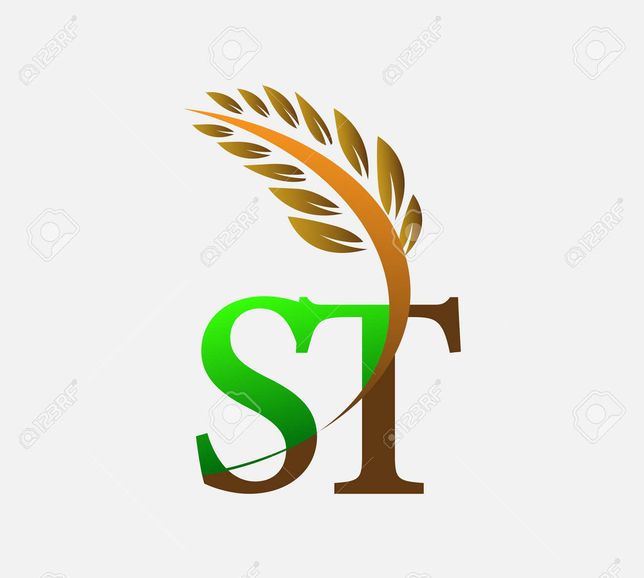 initial letter ST, Agriculture wheat symbol Template vector icon design colored green and brown. - 158763721