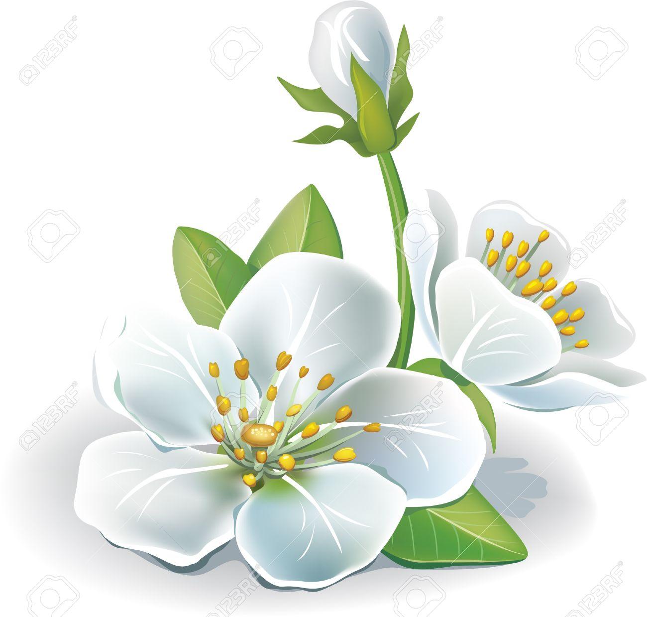 Cherry flower Stock Vector - 9626450