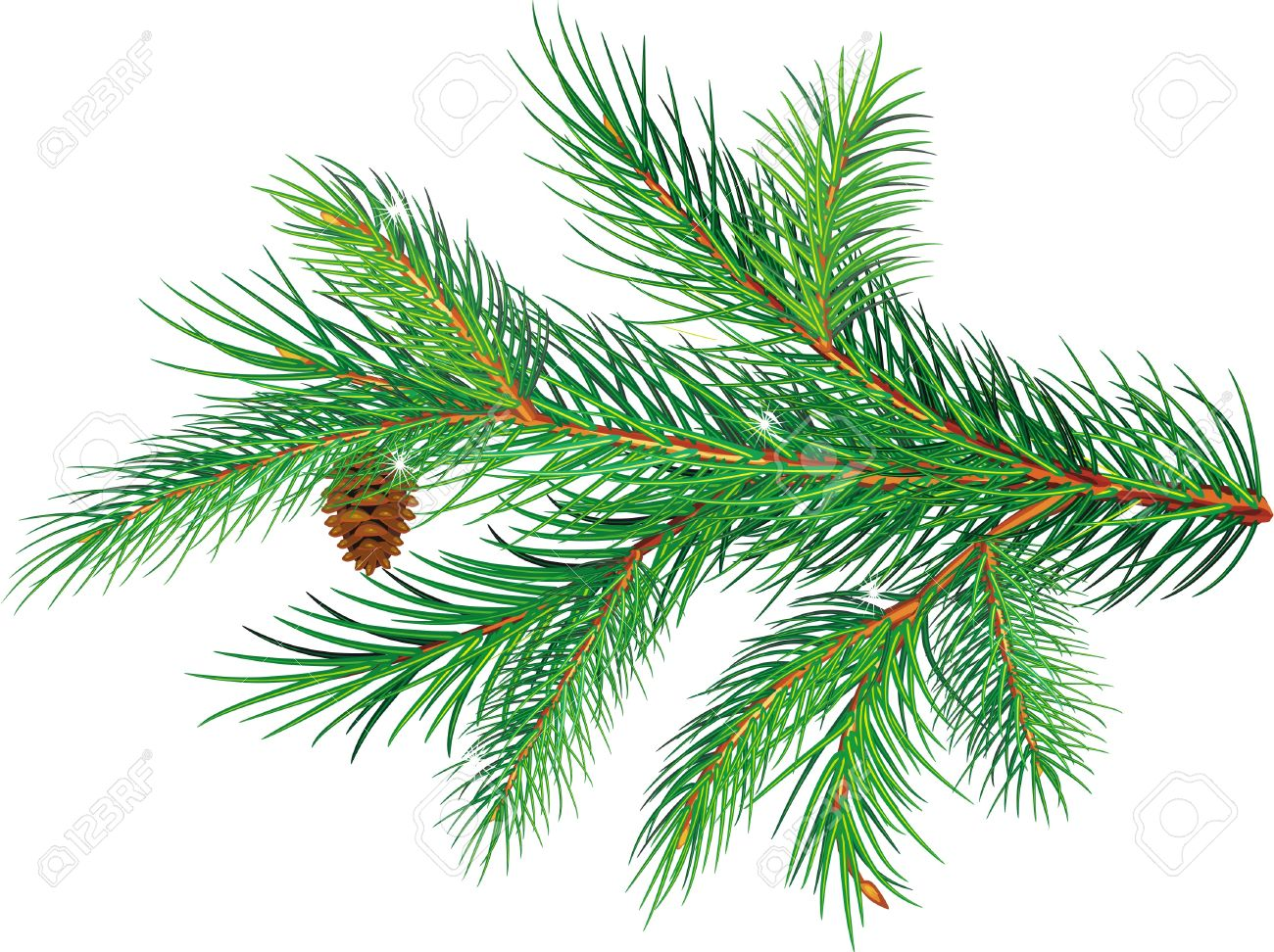 Pine branch Stock Vector - 10993636