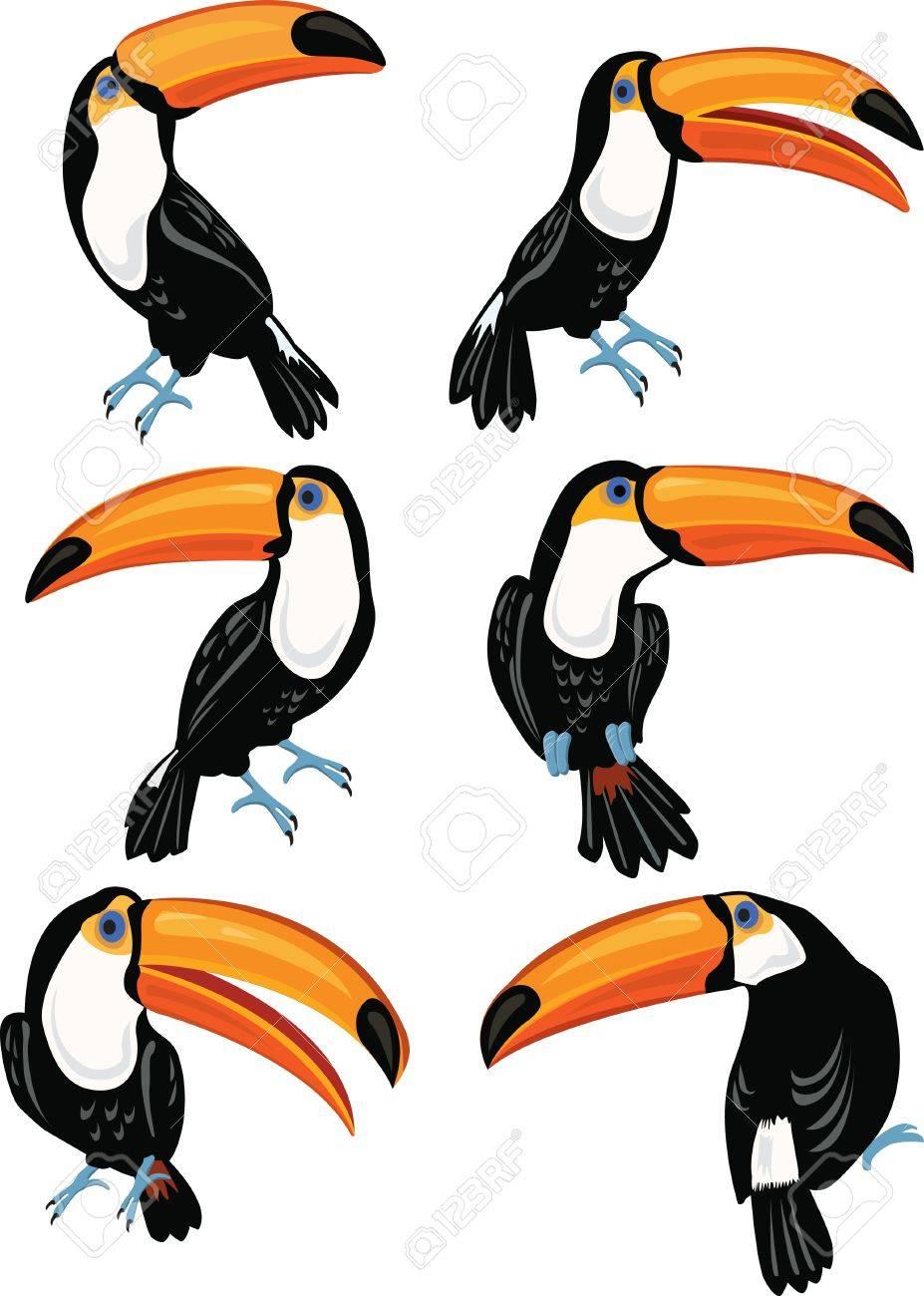 Set of toucans - 20951277