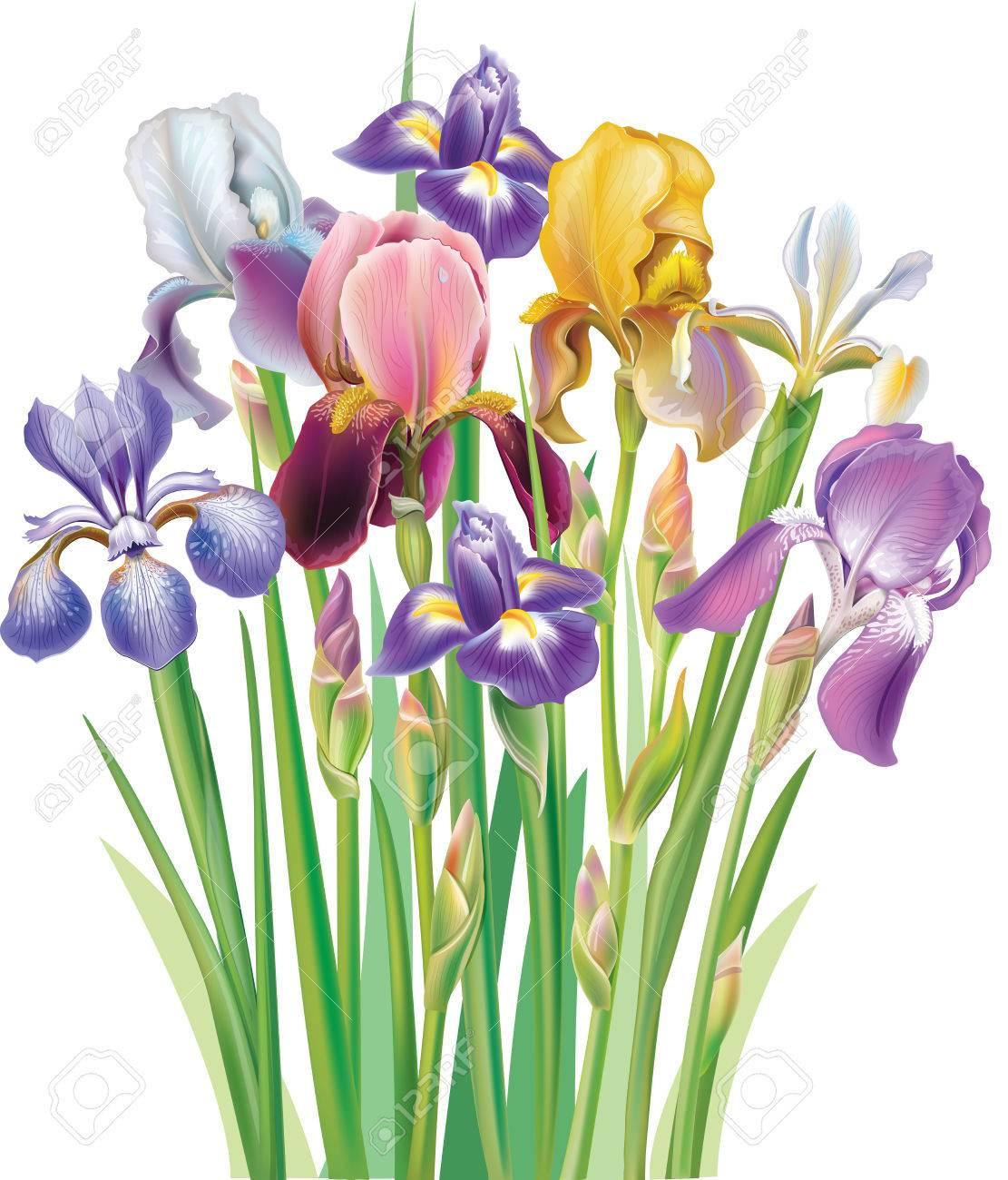 Bouquet of Iris flower - 27565538