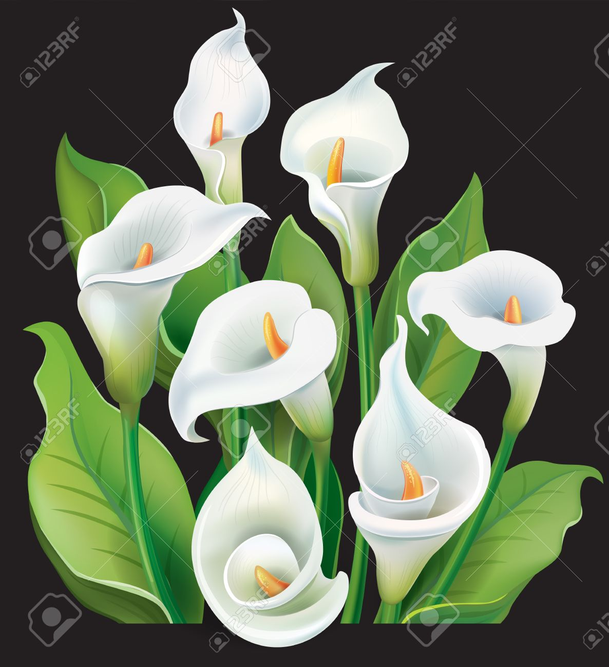 Bouquet Of White Calla Lilies On Black Background Royalty Free