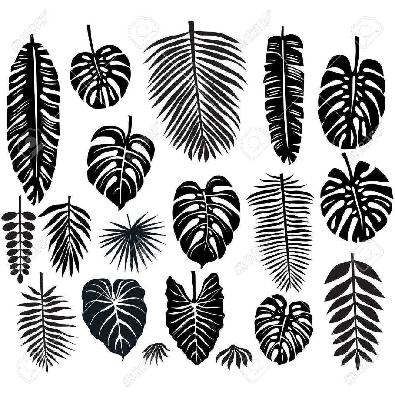 Set Of Tropical Leaves Royalty Free Cliparts Vectors And Stock Illustration Image 59282186 Tropical rainforests are found in a tropical belt around the equator where annual temperature and precipitation are high. set of tropical leaves