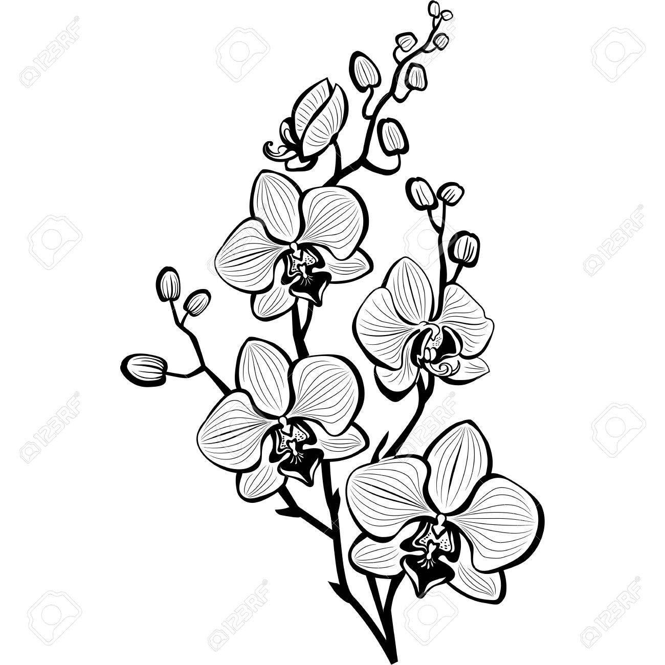 Sketch of orchid flowers - 73654336
