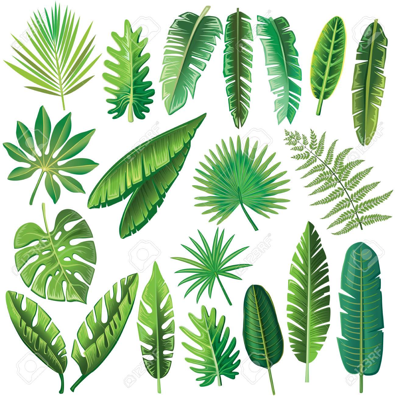 Vector Tropical Leaves Royalty Free Cliparts Vectors And Stock Illustration Image 78740788 Tropical leaf palm print, showing various tropical plants together in one poster. vector tropical leaves