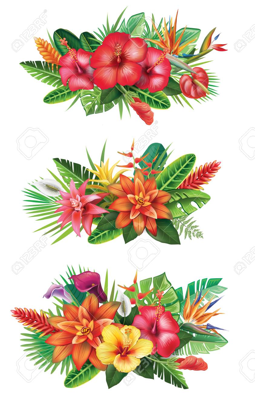Arrangements from tropical flowers - 81880601