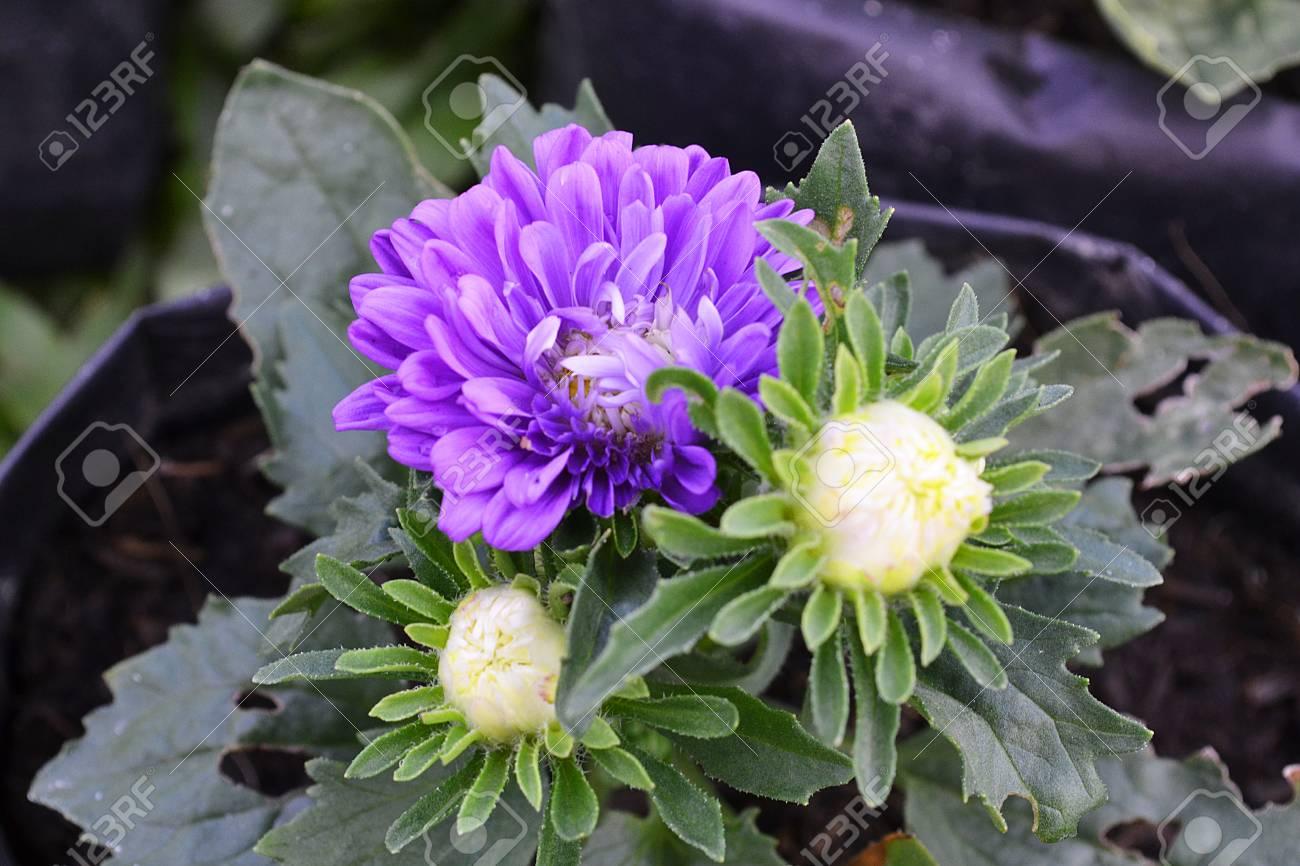 Famoso Uñas De Color Púrpura Ideas De Diseño Cresta - Ideas de ...