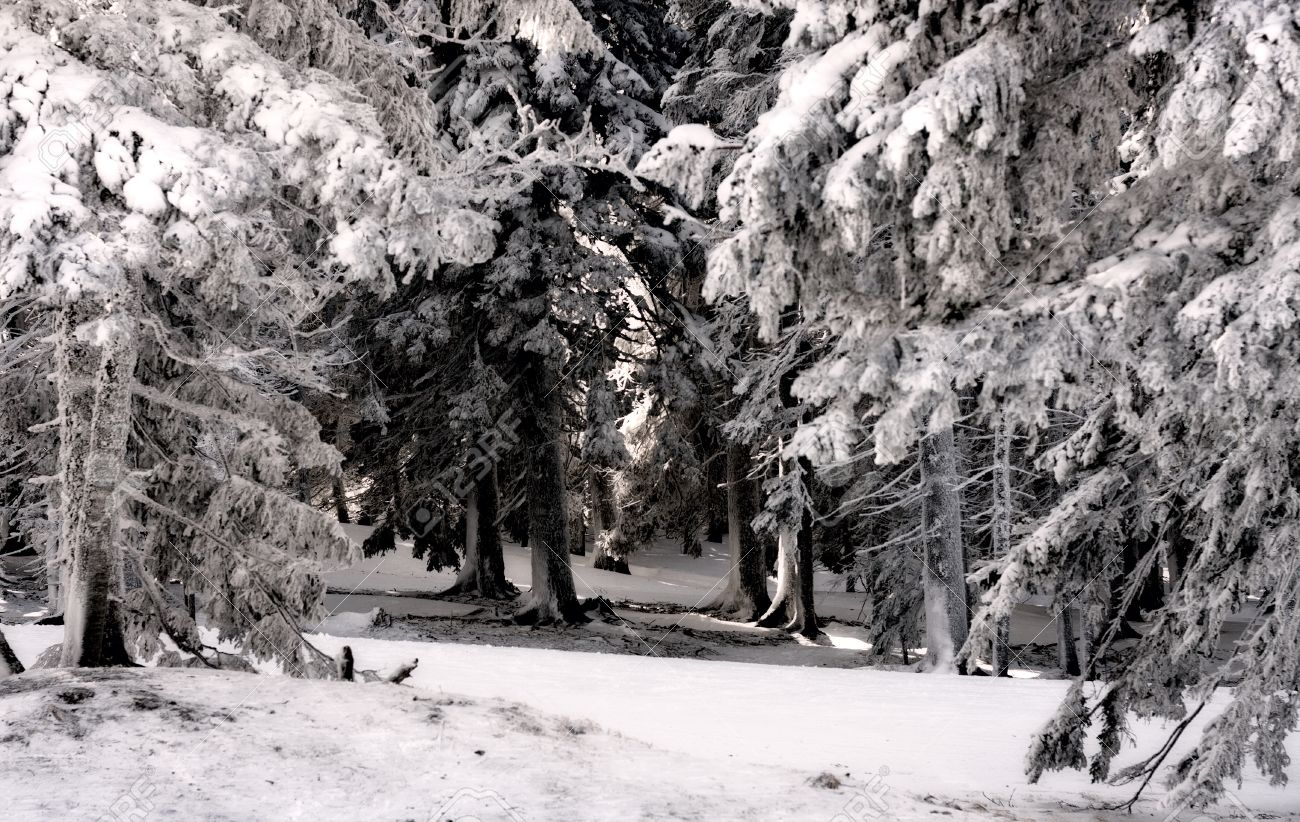 cold dark winter forest with frozen trees stock photo picture and
