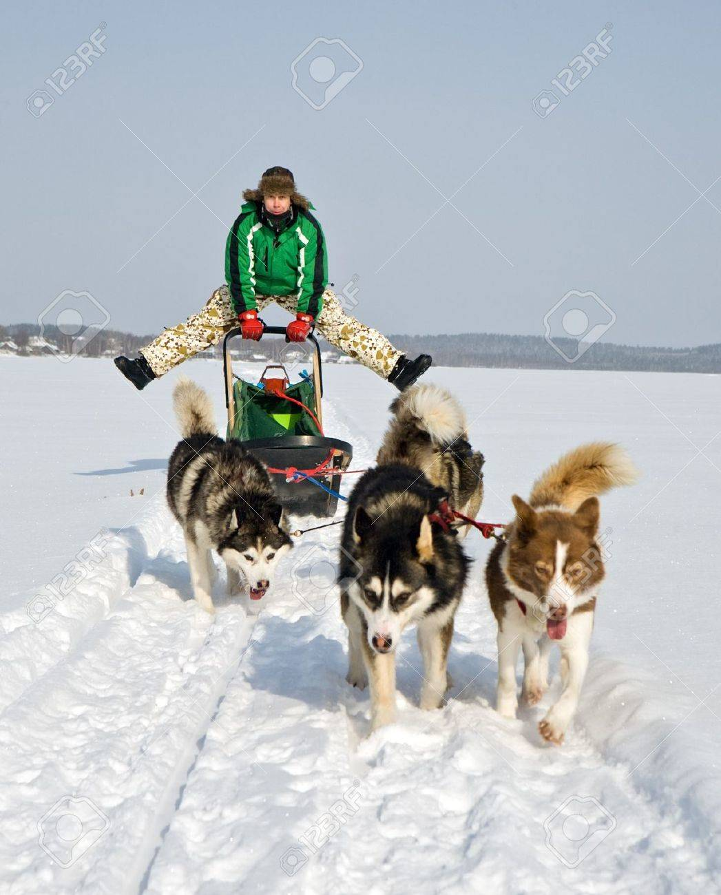 man in dog sledding travel across snow field stock photo picture