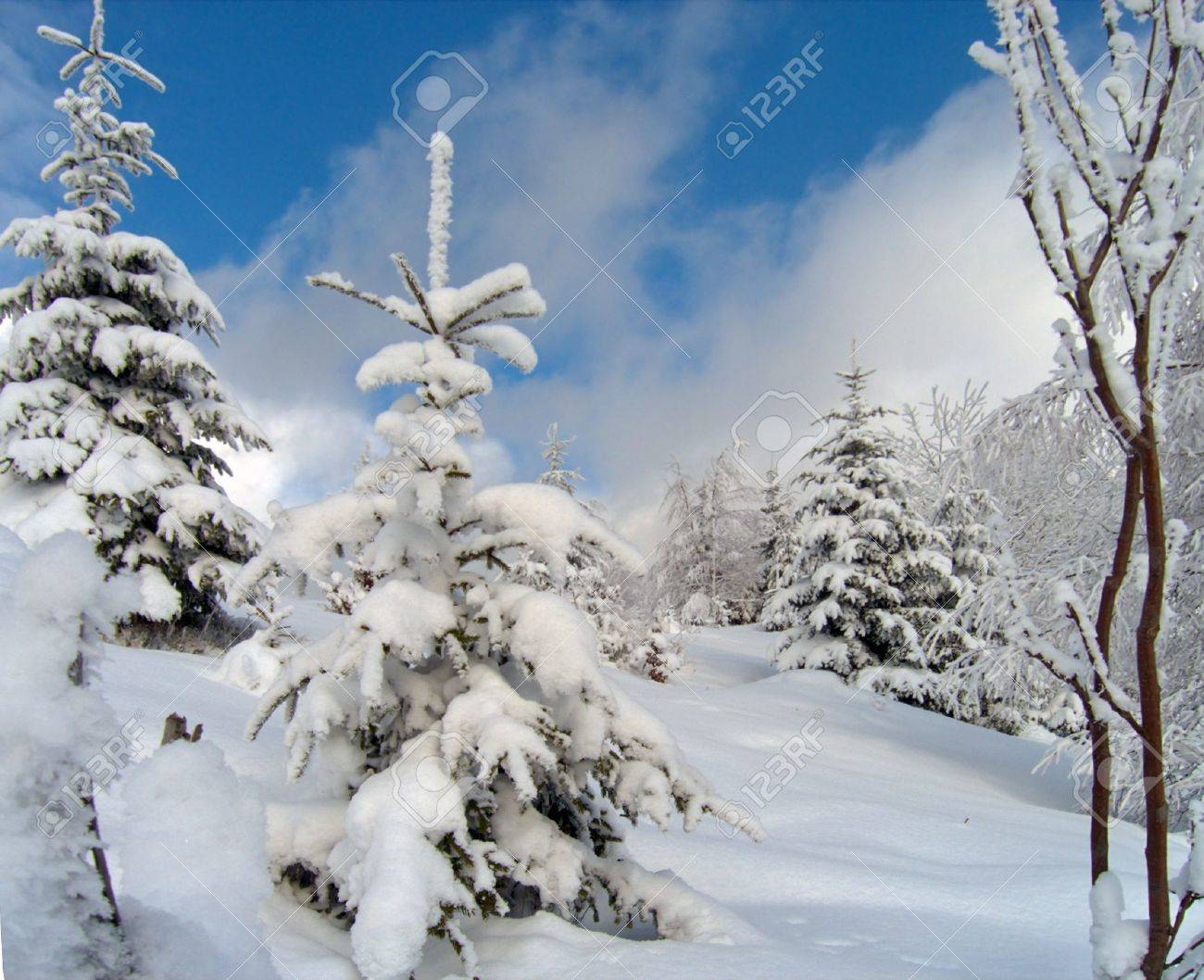 winter snow and rime covered trees on mountainside Stock Photo - 694868