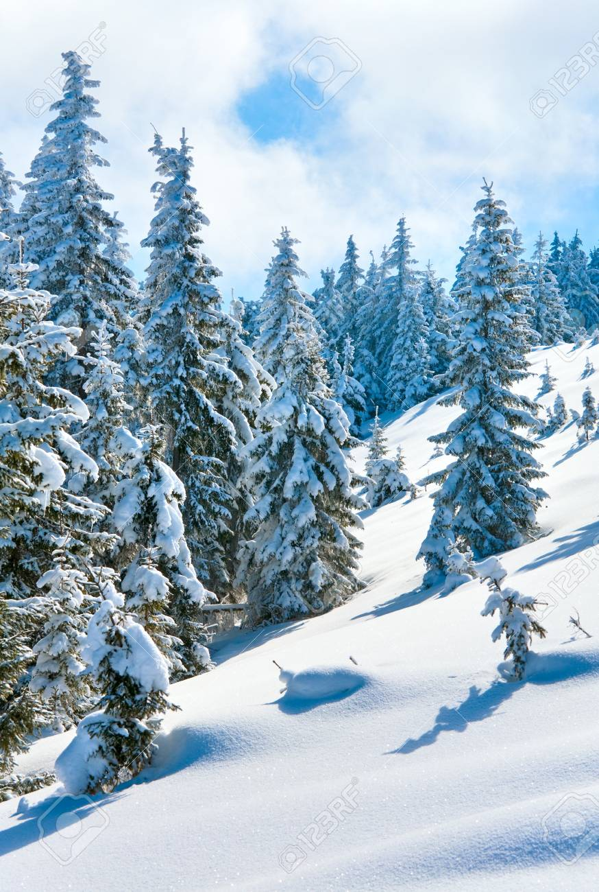 winter calm mountain landscape with beautiful fir trees  on slope (Kukol Mount, Carpathian Mountains, Ukraine) Stock Photo - 7276816