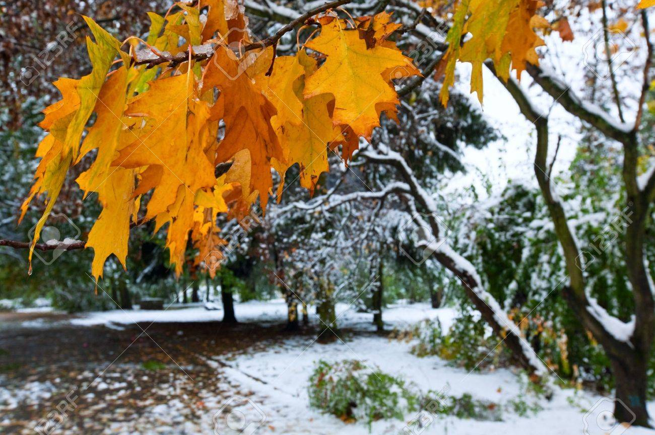 First autumn sudden snow in city park Stock Photo - 7553550