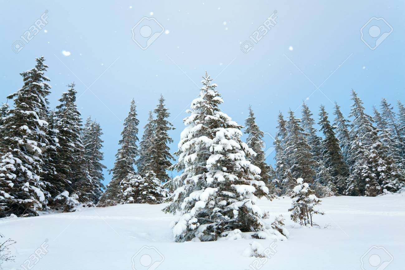 winter calm mountain landscape with snowfall ang beautiful fir trees  on slope (Kukol Mount, Carpathian Mountains, Ukraine) Stock Photo - 7734131