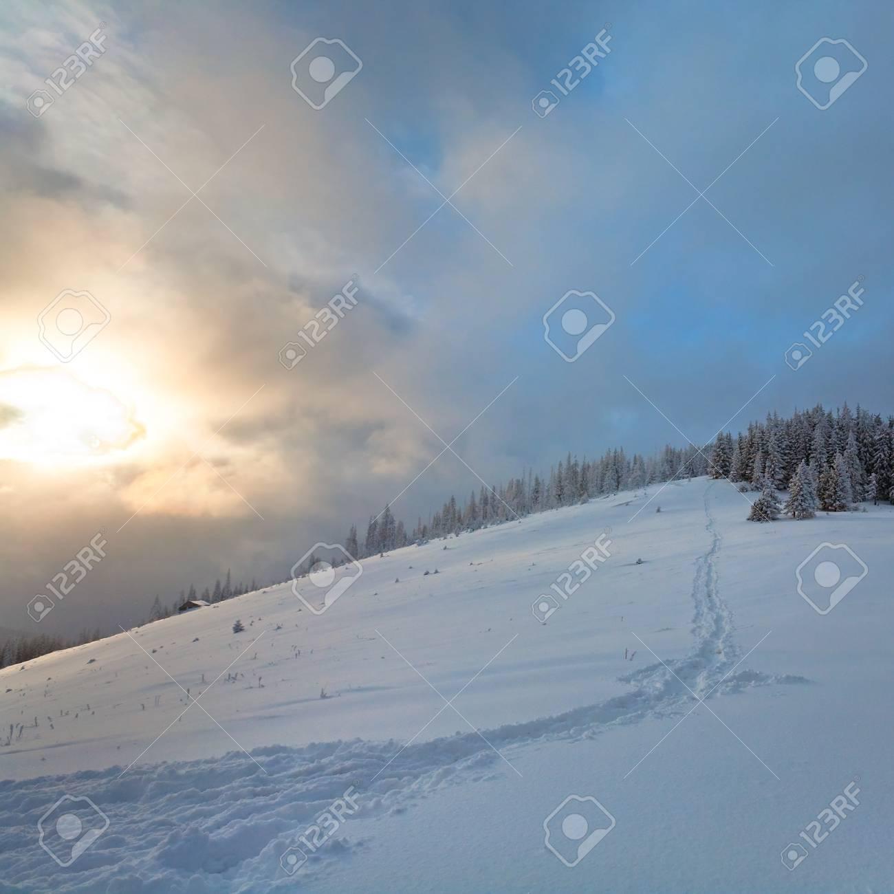 winter evening  calm mountain landscape with fir trees  on slope (Kukol Mount, Carpathian Mountains, Ukraine) Stock Photo - 8303774