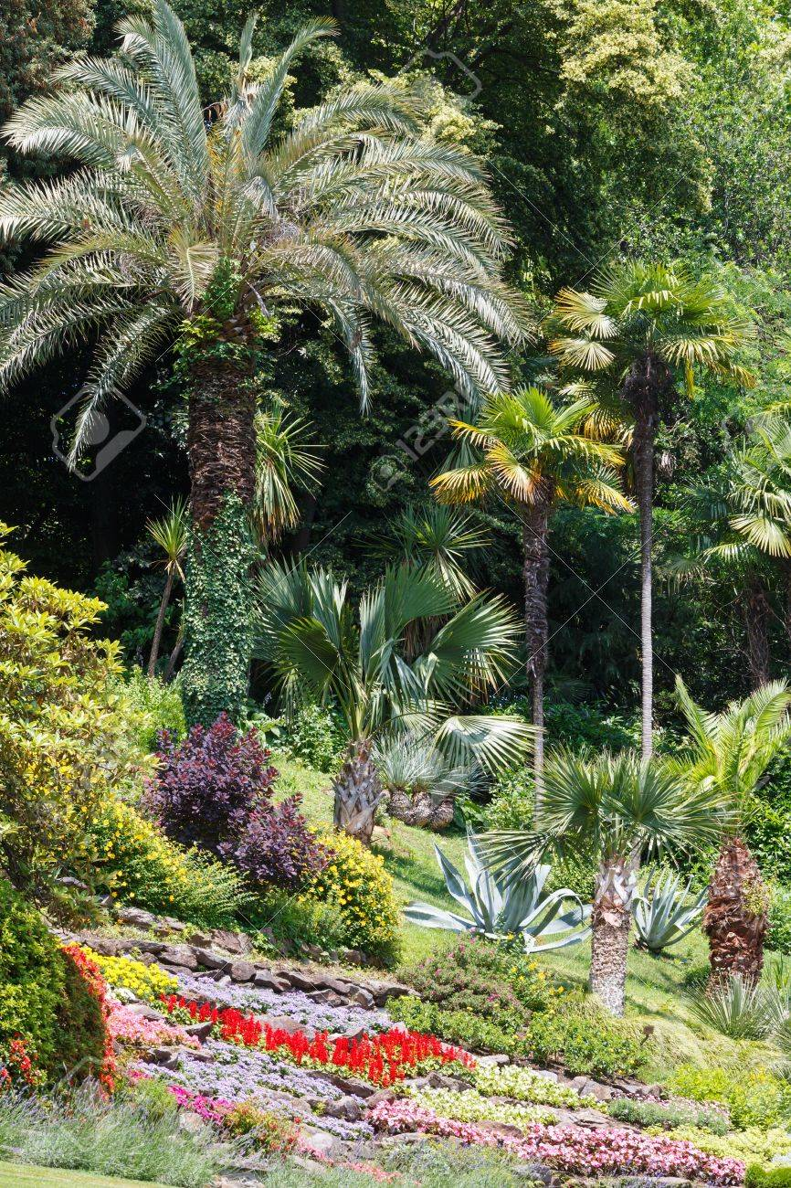 Blossoming Colorful Flowerbeds And Palm Trees In Summer City.. Stock ...