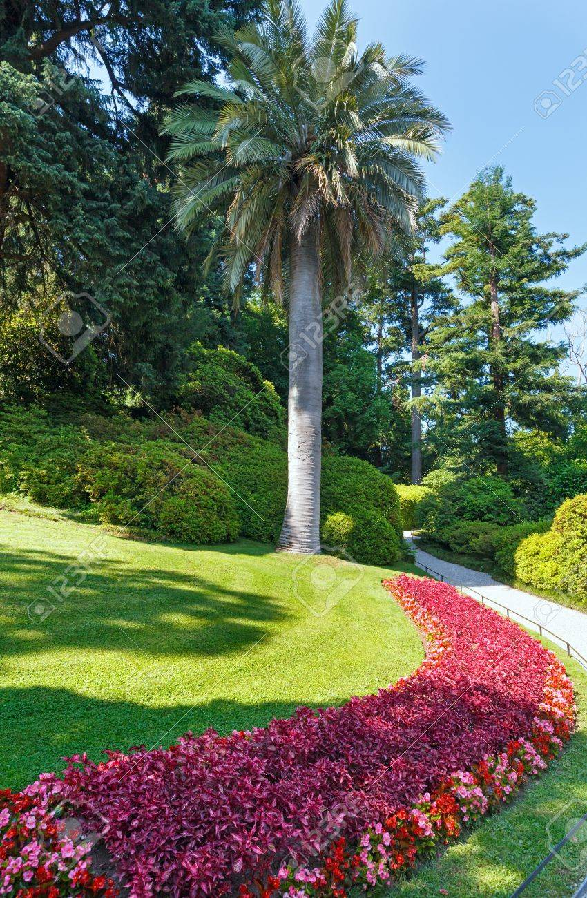 Blossoming Colorful Flowerbed And Palm Trees In Summer City Park ...