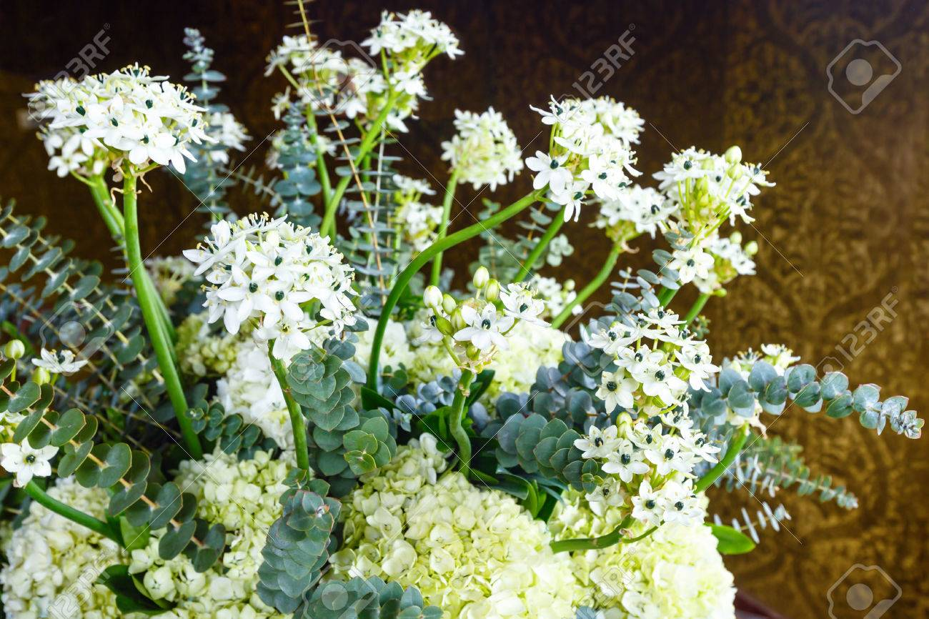 Wonderful Plant With Small White Flowers Indoor Stock Photo Picture