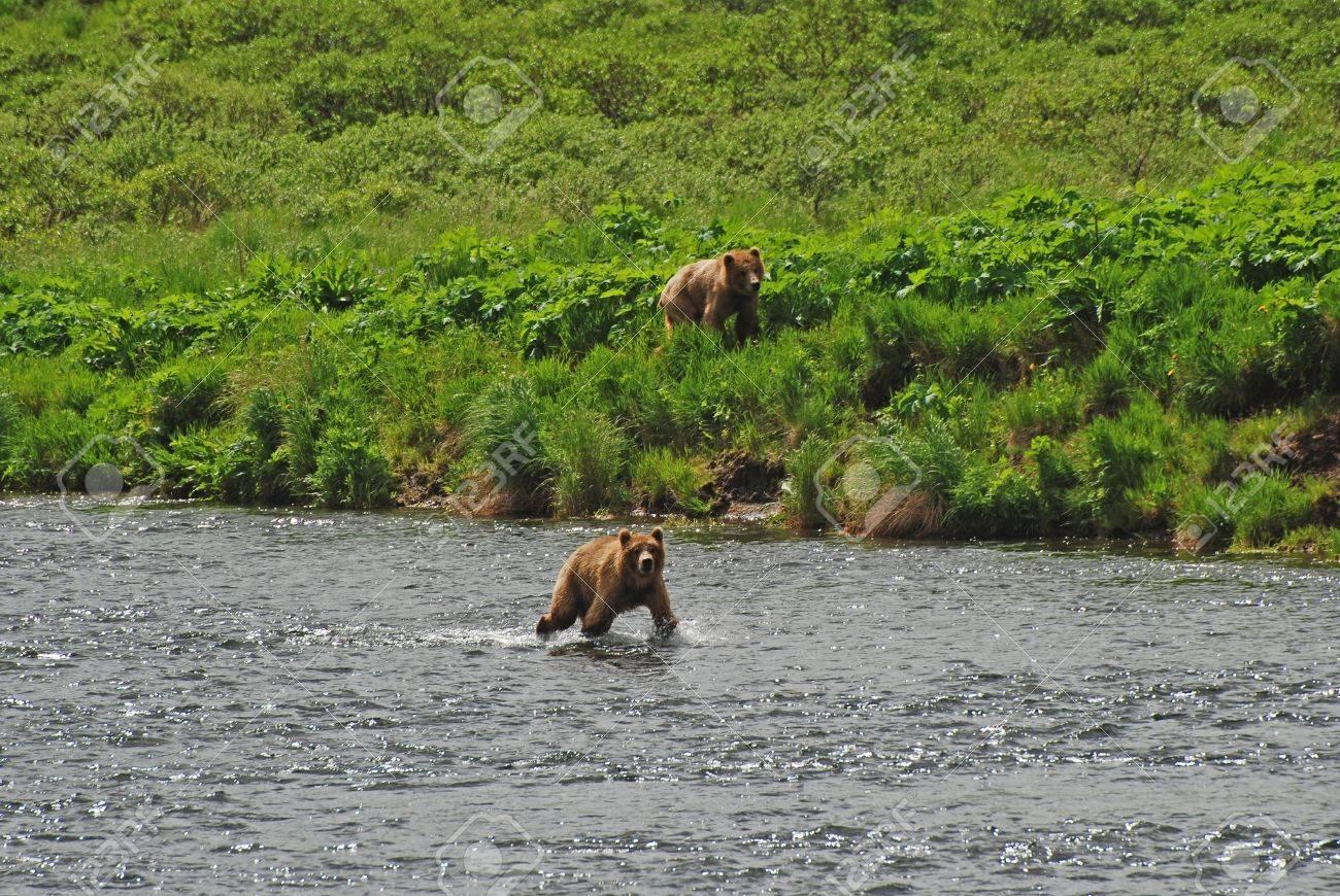 コディアック島フレーザー川で撮...