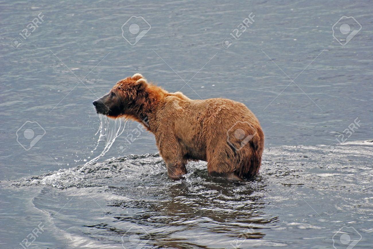アラスカのコディアック島フレー...