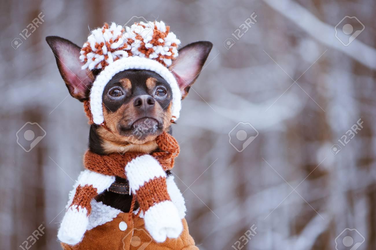 ee11b70154b7a Funny Puppy