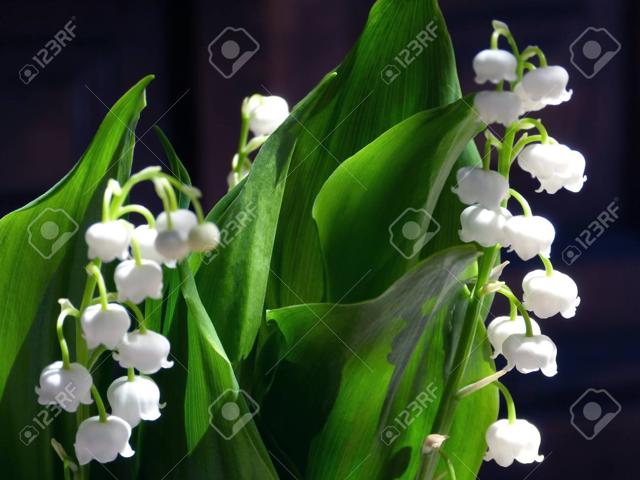 Fleur De Muguet On Background Stock Photo Picture And Royalty Free Image Image 78333453