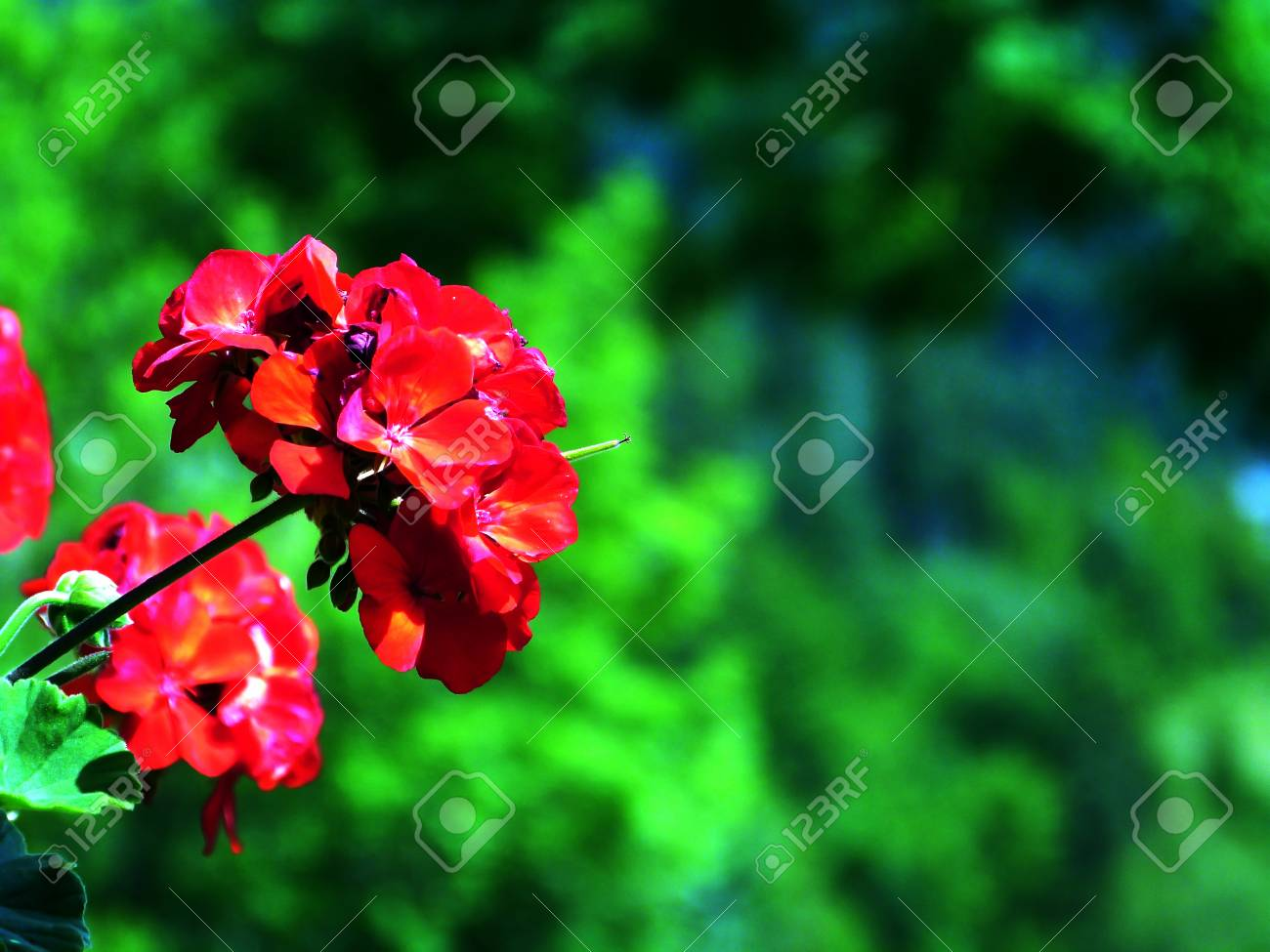 Red flower with mountain background - 86560636