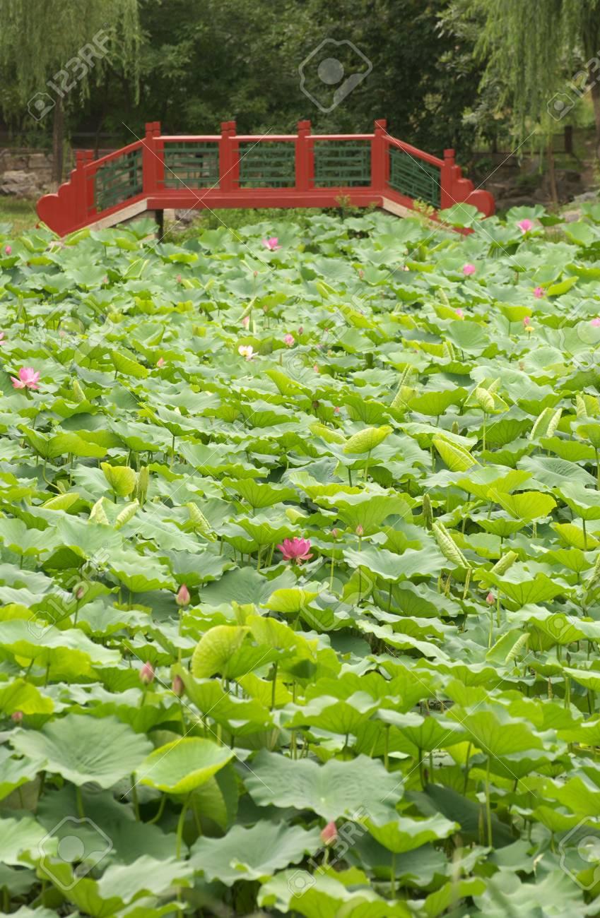 red bridge in park Stock Photo - 5106998