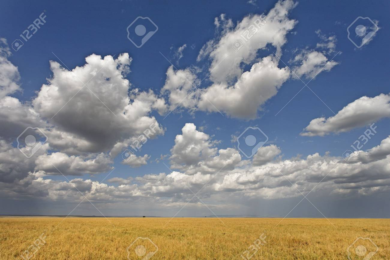 Beautiful cumulus clouds over the golden grasses of the Serengeti