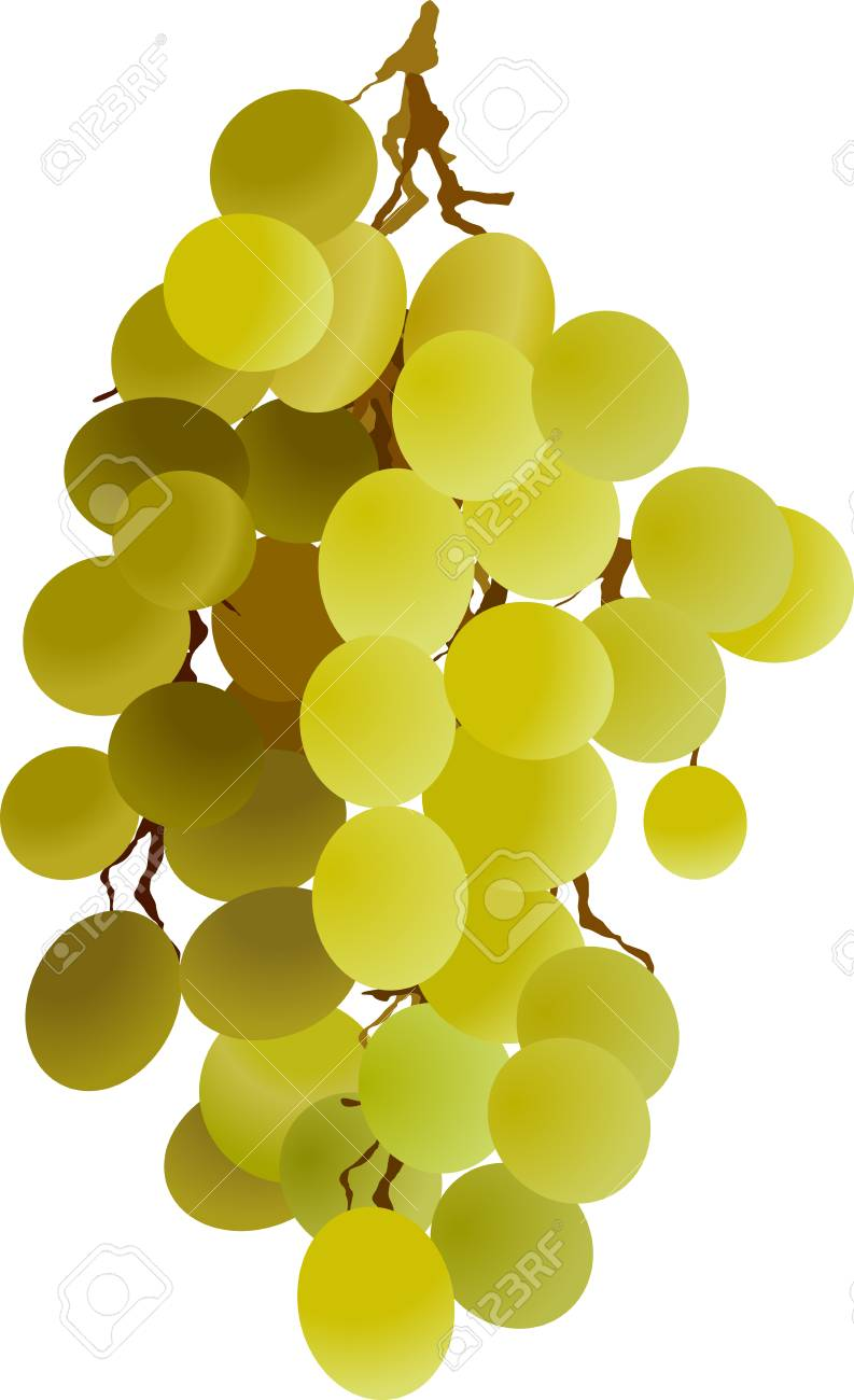 grapes vine berries wine Stock Vector - 4774499