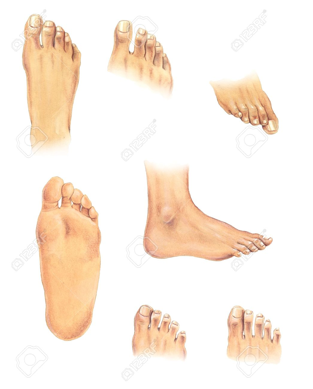 watercolor illustration set of human feet in different positions
