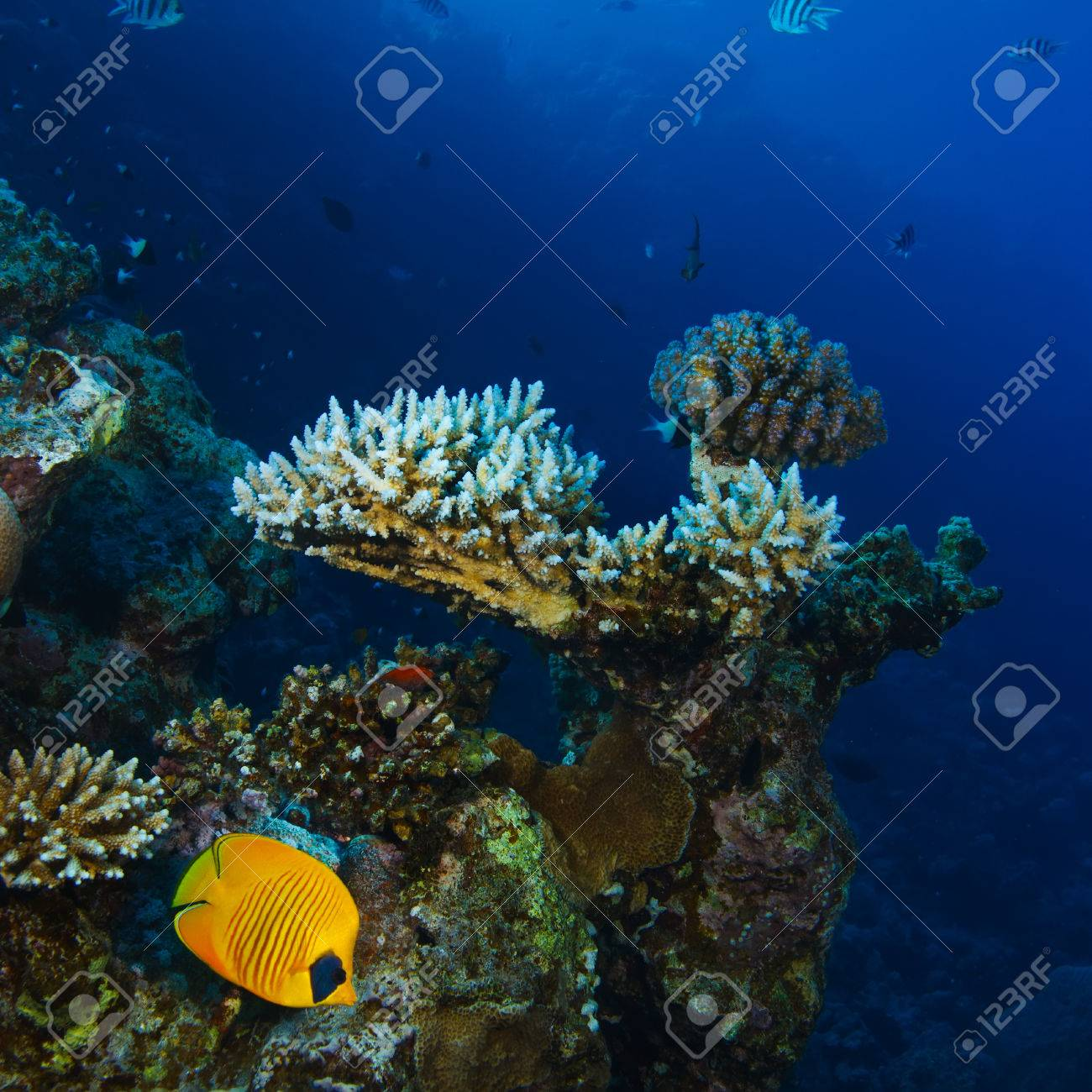 Tropical Diving Underwater Template With Beautiful Coral Reef ...