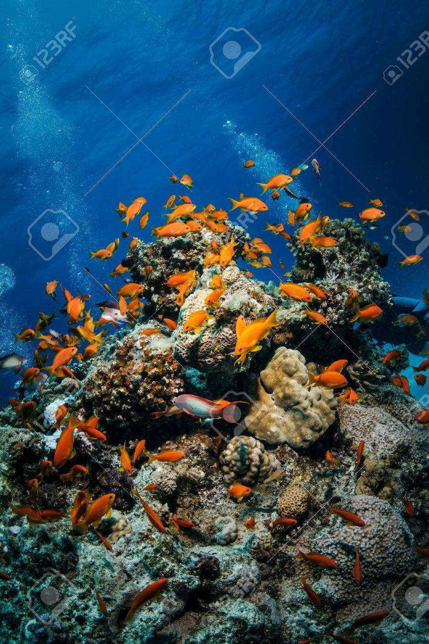 Tropical Underwater Template Beautiful Coral Reef Full Of ...