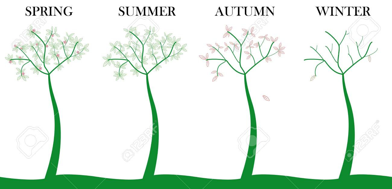 tree four seasons, spring, summer, autumn and winter Stock Vector - 9186217