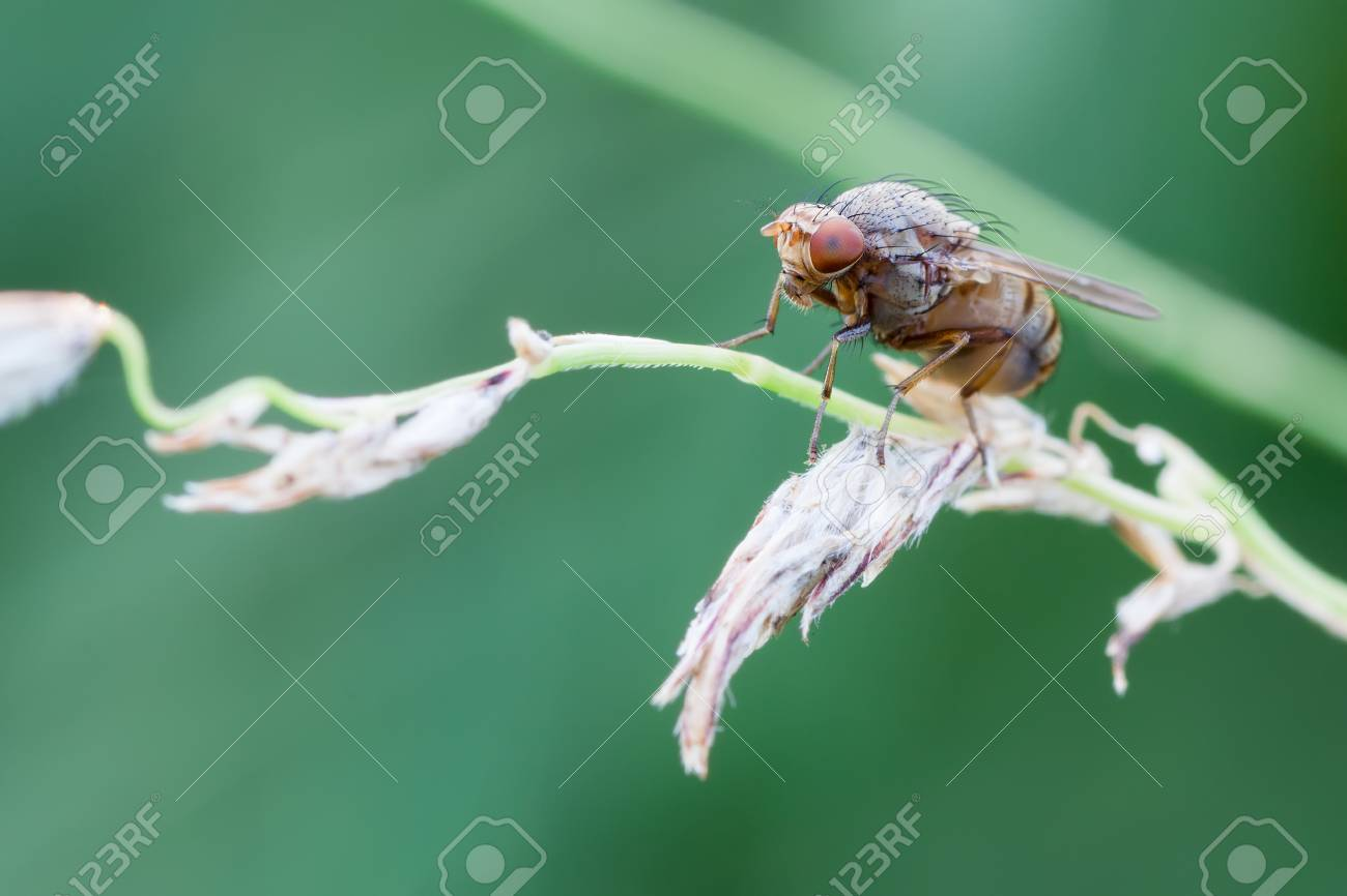 photography macro of fly on plant with green naturla background Stock Photo - 22123721