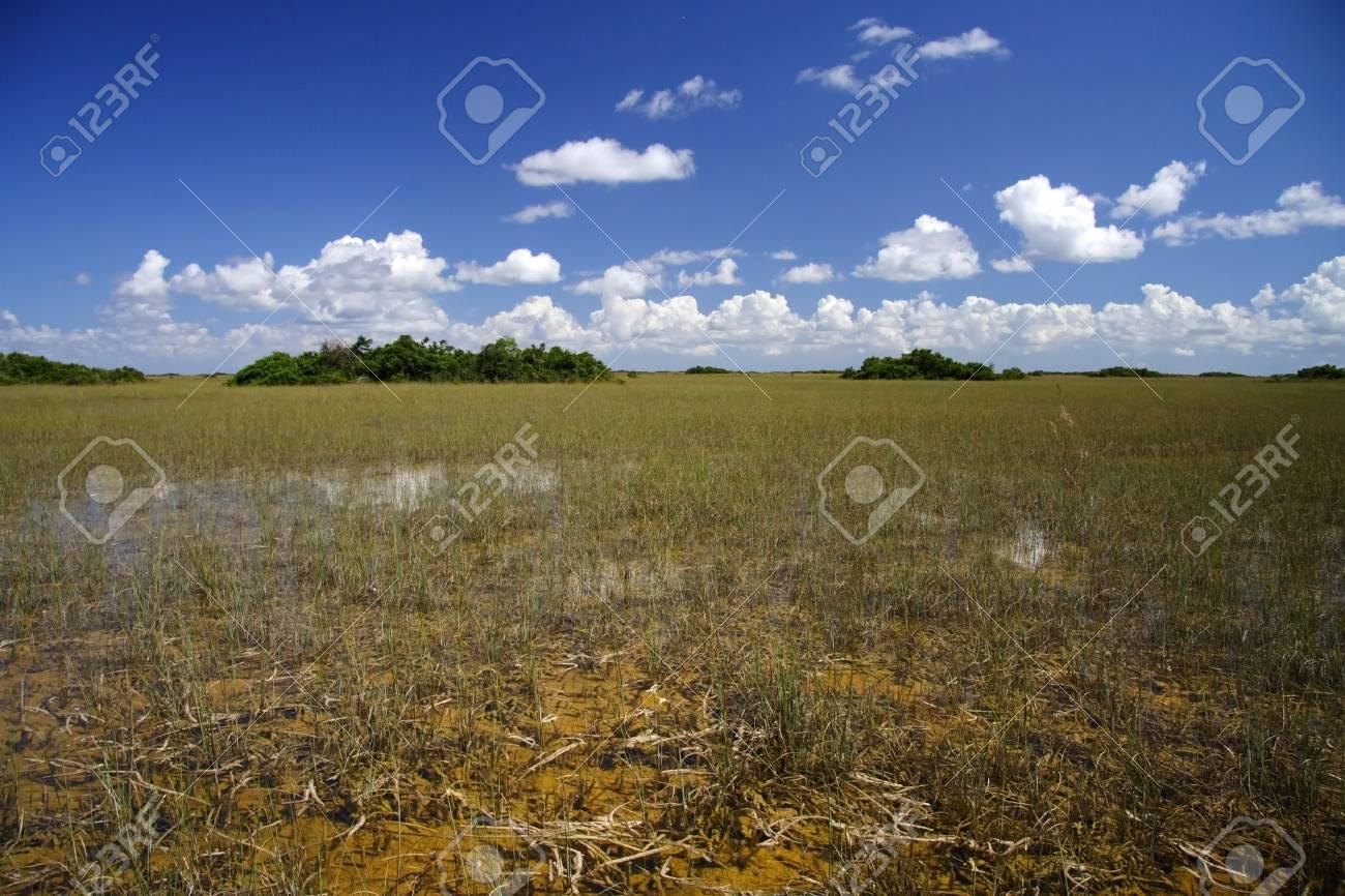 Tropical Hammocks, Florida Everglades Stock Photo - 7078228
