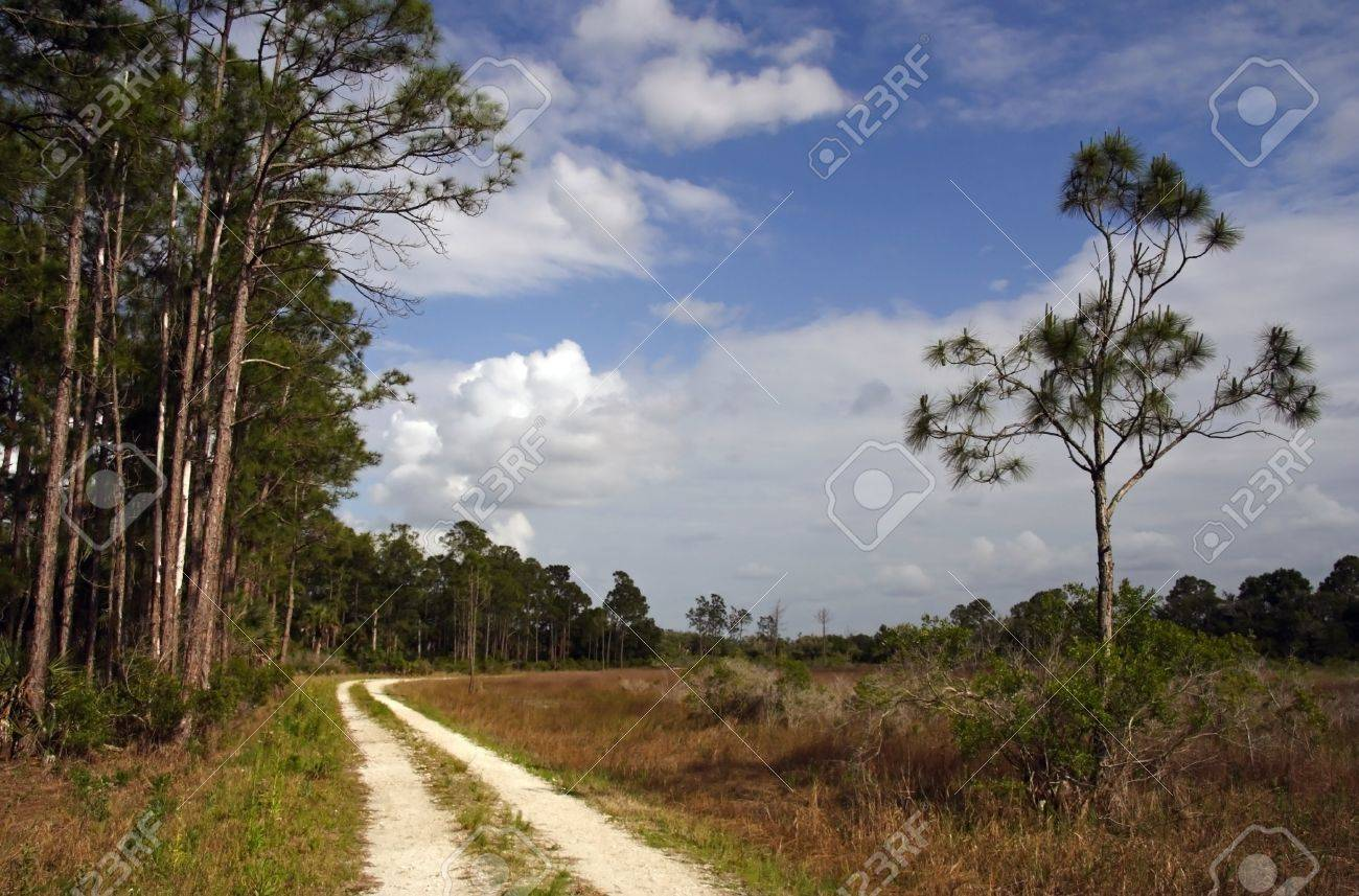 Backcountry Trail, Okaloacoochee Slough State Forest, South Florida Stock Photo - 13190026