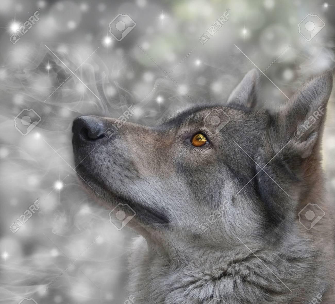 雪背景デジタルのレタッチに狼の...